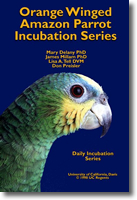 Orange Winged Amazon Parrot Incubation Photos