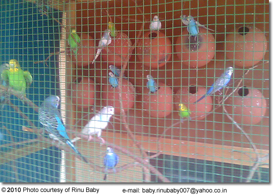 How to Build a Parakeet Cage - Life123 - Articles and Answers