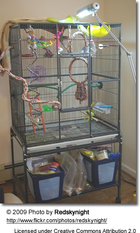 Good Bird Cage Set-up