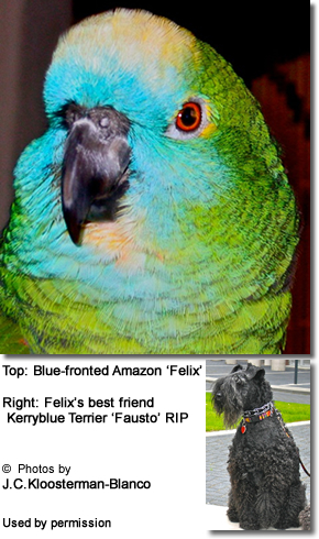 Blue-fronted Amazon with his best friend