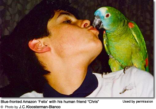 Blue-fronted Amazon Felix with his human companion