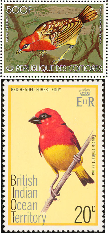 Red-headed Fodies