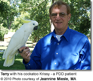 Krissy - a Triton Cockatoo who is a PDD patient with her owner