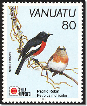 Pacific Robin Petroica multicolor