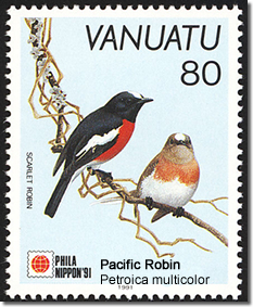 Pacific Robins