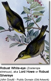 Robust White-eye (Zosterops strenuus), also known as the Lord Howe White-eye or Robust Silvereye, and locally as the