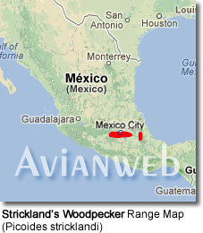 Strickland's Woodpecker Range Map