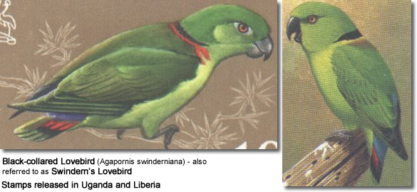 Black-collared Lovebird (Agapornis swinderniana) - also referred to as Swindern's Lovebird - STAMPS