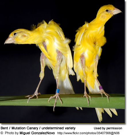 Type canary