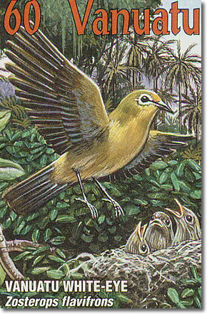 Vanuatu White-eye or Yellow-fronted White-eye (Zosterops flavifron
