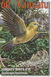 Vanuatu White-eye or Yellow-fronted White-eye (Zosterops flavifrons)