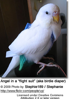 Budgie in flightsuit