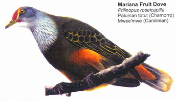 Mariana Fruit Dove