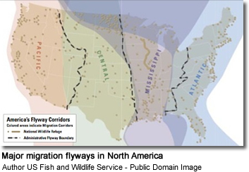 Major migration flyways in North America