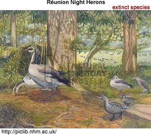 Reunion Night Herons