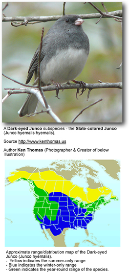 Slate-colored Junco - Photo and Distribution Map
