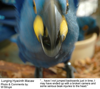 Lunging Macaw