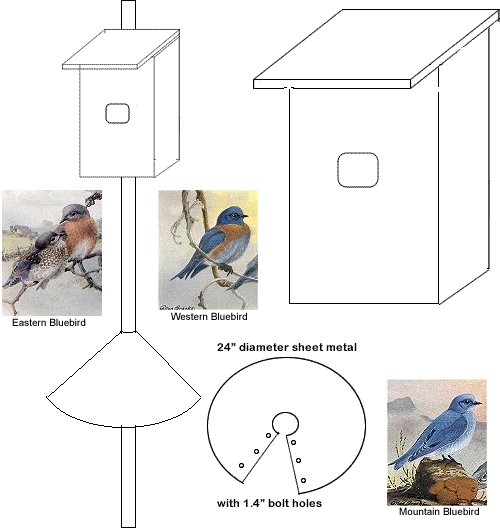 Bird Houses Nesting Box Woodworking Plan For Eastern