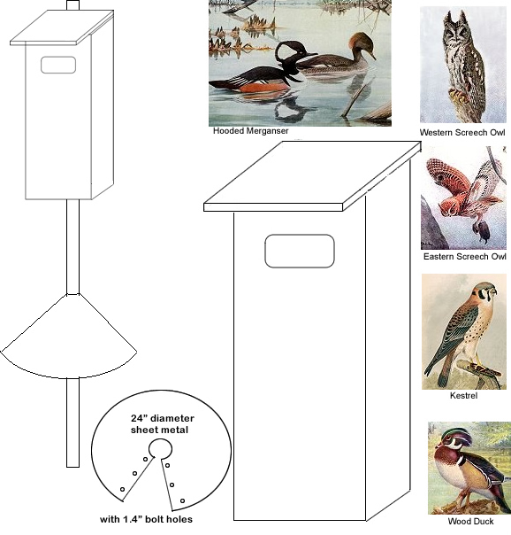 Wood Ducks and Owls Nesting Box