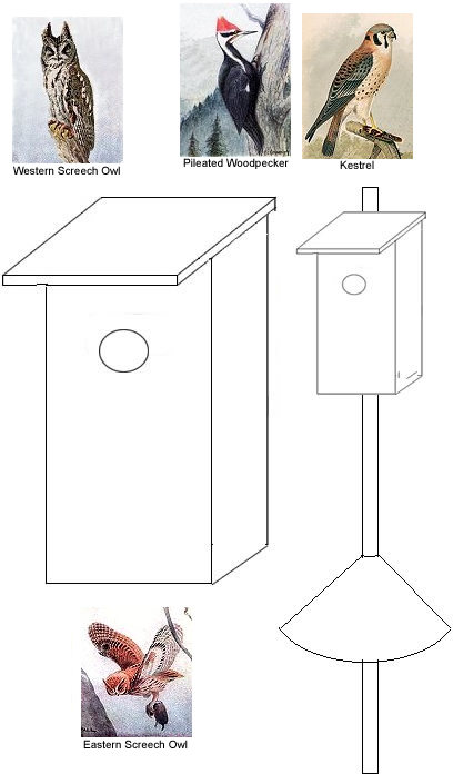 Plans to build pileated woodpecker bird house plans pdf plans for House plans torrent
