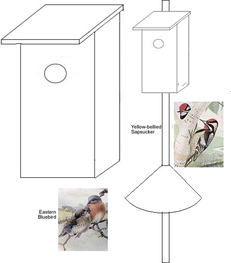 Bird Houses Nesting Box Woodworking Plans Yellow