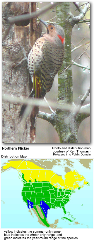 Northern Flicker and  Distribution Map