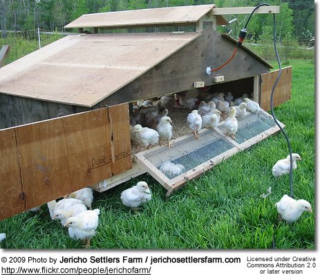 Outside Chick Brooder