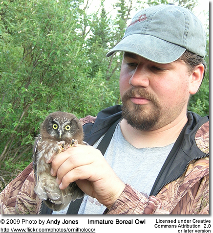 Young Immature Owl held by Andy Jones