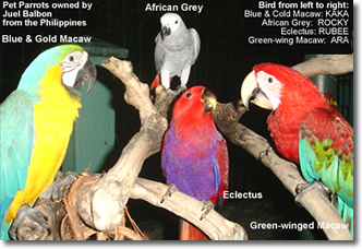 my favourite pet parrot essays