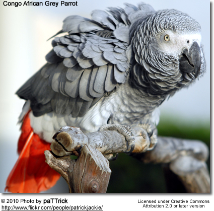 Understanding Parrots Why Parrots Do What They Do