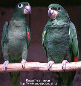 Kawall's Amazon