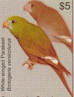 Canary-wing Parakeets