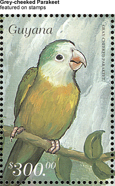 Grey-cheeked Parakeet