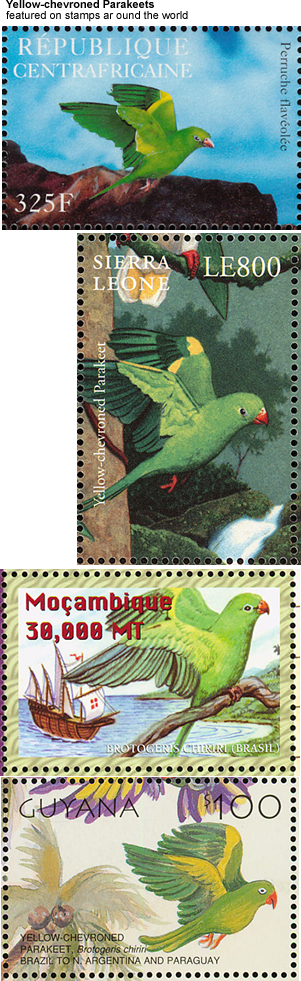 Yellow-chevroned Parakeets