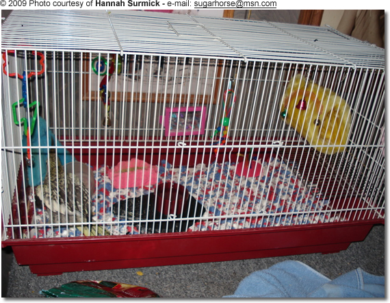 Erin's Cage - customized to accommodate her special needs