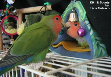 birds for pets