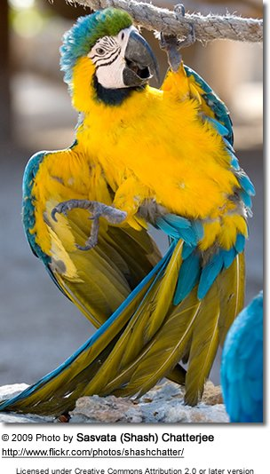 Blue and  Yellow Macaw hanging around