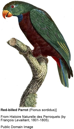 Red-billed Parrots