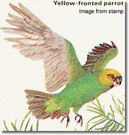 Yellow-fronted Parrot (Poicephalus flavifrons)