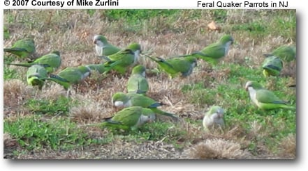 Feral Quakers in NJ