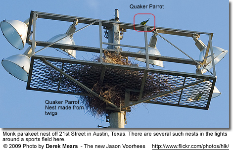 Quakers Nest on Flood Lights
