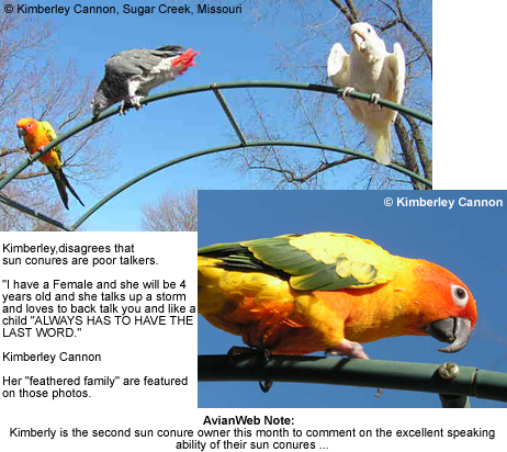 Kimberly's Sun Conure, African Grey Parrot and Cockatoo