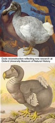 The Extinct Dodo