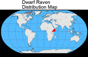 Dwarf Ravens - Distribution Map