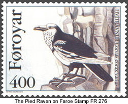 Pied Raven - Extinct