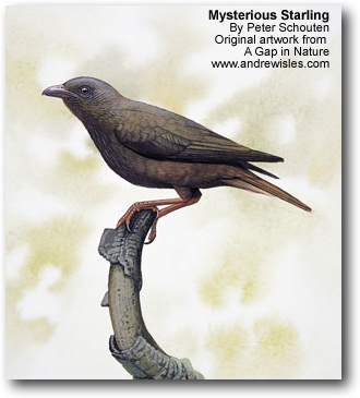 Mysterious Starling