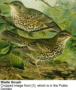 Mistle Thrushes