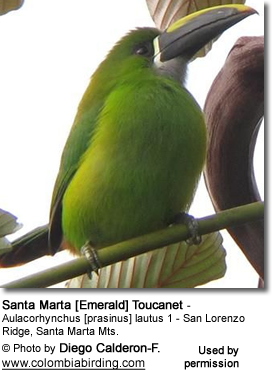 Blue-throated Toucan