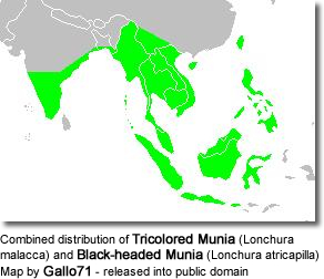 Combined distribution of Tricoloured Munia (Lonchura malacca) and Black-headed Munia