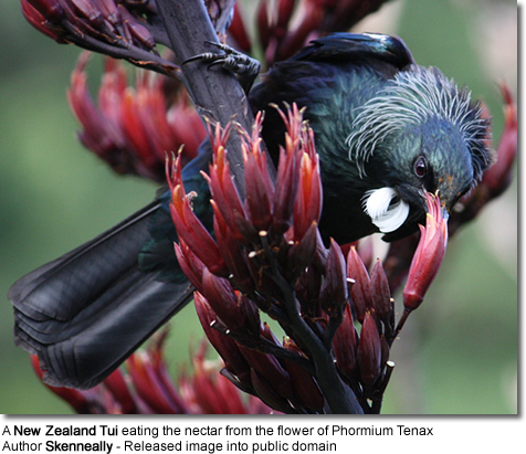 Karori Wildlife Sanctuary, Wellington, New Zealand. A predator-proof fence and native plants makes the sanctuary attractive to birds, but they are free to come and go.